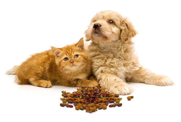 puppy and kitten sitting next to each other with stack of dry food in front of them