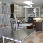 pets treatment area at Highland Creek Animal Clinic